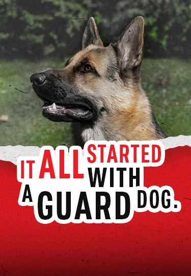 AMAROK It all Started with a Guard Dog